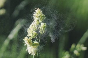 gif alergia primavera